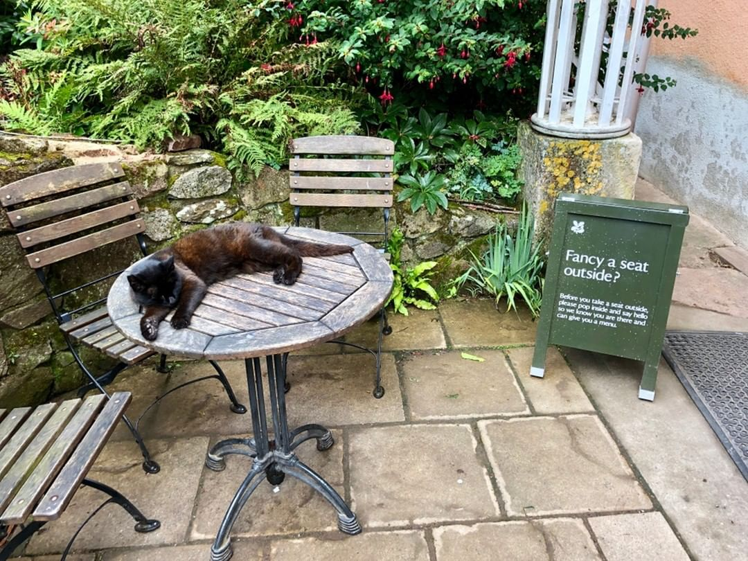 While the good weather holds, don't forget about our lovely terrace and garden at Chapel Row. We cannot promise you sleeping cats but we can bring you wine. #corkagebath